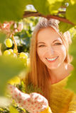 Woman winegrower picking grapes Royalty Free Stock Images