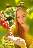 Woman winegrower picking grapes Stock Photography