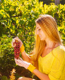 Woman winegrower picking grapes at harvest time Stock Photo