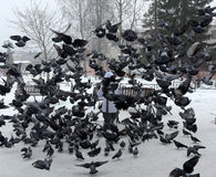 Woman winter feeding pigeons Stock Photography