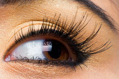Free Woman With With Long Lashes Royalty Free Stock Photo - 19289555