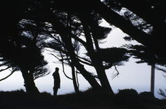 A woman in the woods. A silhouette of a lady standing in the forest Stock Images