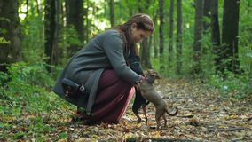 Woman in the woods squats and strokes stroking two small dogs. Dogs try to get on her lap stock footage