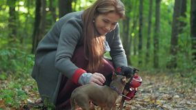 A woman in the woods squatting caresses two small dogs. The rays of the sun fall on her hair stock video footage