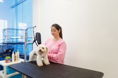 Woman At Work In Pet Store And Grooming Dog. Young woman working in pet shop, brushing and drying dog hair, girl grooming puppy for beauty in store. People, job Royalty Free Stock Photography