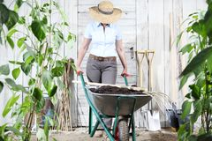 Woman work in vegetable garden with wheelbarrow and pitchfork, s stock photos