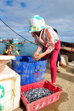 A woman worker is collecting her anchovies fish into a basket to bring to the local seafood market in Ly Son island Stock Photo