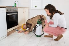 Woman And Worker With Pesticide Sprayer. Young Woman And Worker With Pesticide Sprayer In Kitchen At Home royalty free stock photo