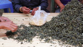 woman workers separating tea leaves from branches stock footage