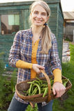 Woman working on allotment Royalty Free Stock Image