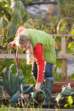 Woman working on allotment Stock Images