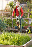 Woman working on allotment Stock Image