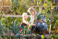 Woman working on allotment with child. Happy women working on allotment with young child stock photos