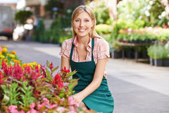 Woman working as gardener in nursery shop. Smiling young woman working as gardener in a nursery shop Stock Image