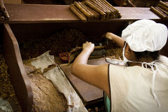 Woman working in a cigar factory Stock Images