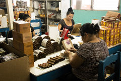 Woman working in a cigar factory Royalty Free Stock Photography