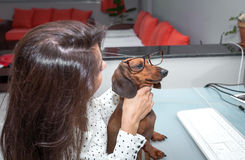 Woman working on computer whit dog. A beautiful woman with glasses working on computer in your office royalty free stock photo