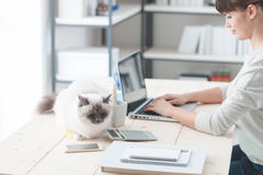 Woman working at desk with her cat Royalty Free Stock Image