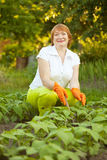 Woman working in field of beans Royalty Free Stock Photos