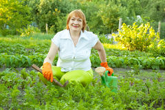 Woman working in field of carrot Stock Photos
