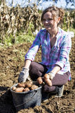 Woman working on the field, harvesting potatoes Royalty Free Stock Images