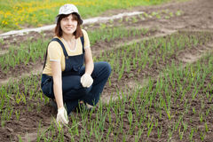 Woman  working in field of onion. Young  woman  working in field of onion Royalty Free Stock Photos