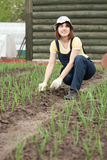 Woman  working in field of onion Stock Photos