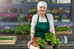 Woman working in florist shop Stock Photography