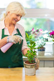 Woman working in florist shop Stock Photo