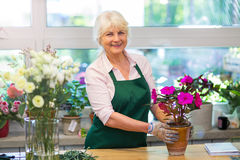 Woman working in florist shop Stock Photos
