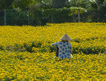 A woman working at the flower field in southern Vietnam Stock Image