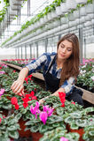 Woman working with flowers Stock Photos