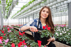Woman working with flowers Stock Photo