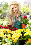 Woman working with flowers at a greenhouse. Stock Photos