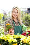Woman working with flowers at a greenhouse. Stock Photography