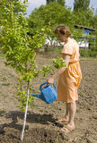 Woman working in garden Stock Photography