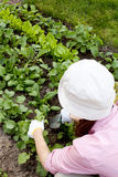 Woman  working in the garden bed Stock Images