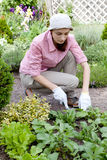 woman  working in the garden bed Royalty Free Stock Images