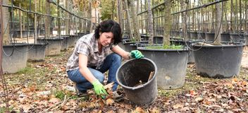 Woman working in the garden center, picking up dry leaves Stock Photography