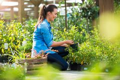 Woman working in garden center Royalty Free Stock Image