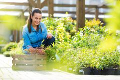 Woman working in garden center Stock Photography