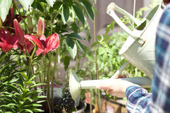 Woman working in garden center. Watering flowers stock image