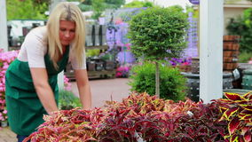 Woman working at the garden center Stock Image