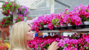Woman working at the garden centre at the flower shelf Stock Image