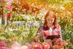Woman working with garden flowers Stock Photos