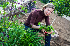 Woman working in garden Royalty Free Stock Photos