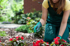 Woman working in garden Royalty Free Stock Photography
