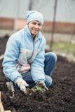 A woman is working in the garden to plant strawberries. Woman is working in the garden to plant strawberries Royalty Free Stock Images