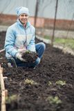 A woman is working in the garden to plant strawberries. Woman is working in the garden to plant strawberries Royalty Free Stock Image