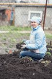 A woman is working in the garden to plant strawberries. Woman is working in the garden to plant strawberries Stock Images